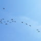 vogelschwarm wolke m bearbeitet3 80x80 - Modul 1 - Effektive Meetings gestalten in Zürich