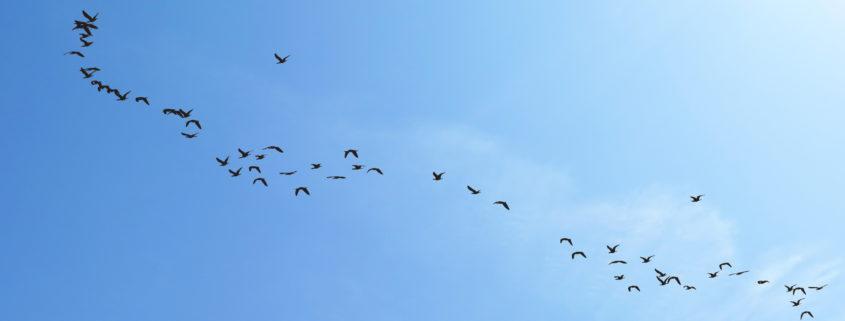 vogelschwarm wolke m bearbeitet3 845x321 - Zweitagesworkshop: Wie Soziokratie in Unternehmen wirkt